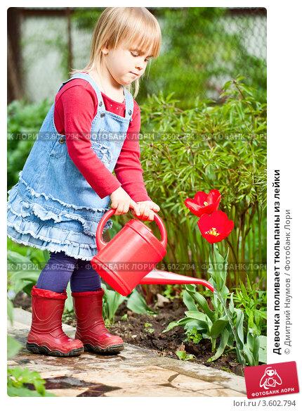 Купить «Девочка поливает тюльпаны из лейки», фото № 3602794, снято 8 мая 2012 г. (c) Дмитрий Наумов / Фотобанк Лори