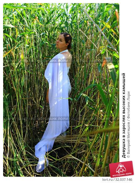 Купить «Девушка в зарослях высоких камышей», фото № 32037146, снято 19 июля 2019 г. (c) Валерий Митяшов / Фотобанк Лори