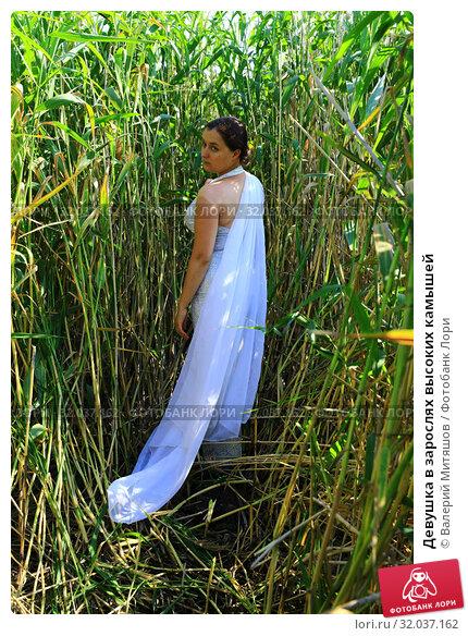 Купить «Девушка в зарослях высоких камышей», фото № 32037162, снято 19 июля 2019 г. (c) Валерий Митяшов / Фотобанк Лори