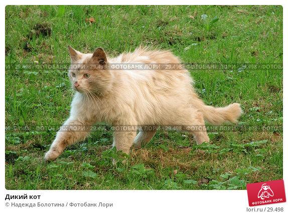 Дикий кот, фото № 29498, снято 13 мая 2006 г. (c) Надежда Болотина / Фотобанк Лори