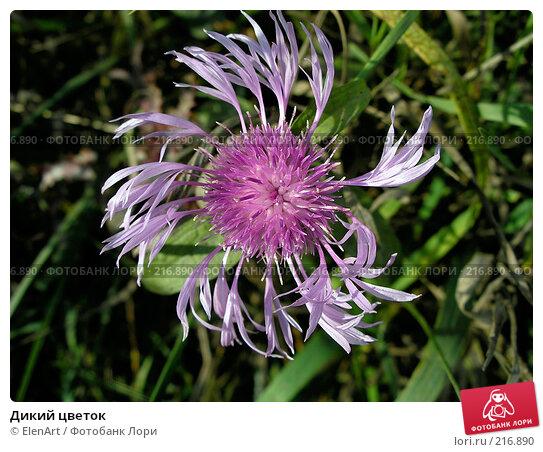 Дикий цветок, фото № 216890, снято 22 июля 2017 г. (c) ElenArt / Фотобанк Лори
