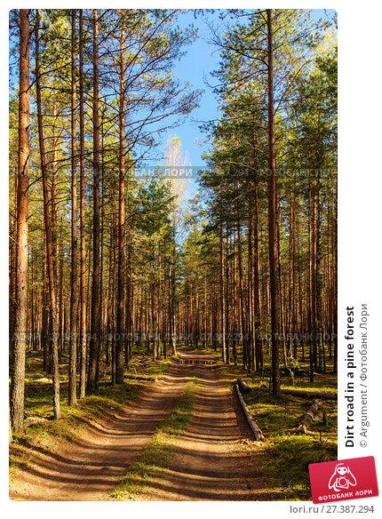 Купить «Dirt road in a pine forest», фото № 27387294, снято 6 сентября 2014 г. (c) Argument / Фотобанк Лори