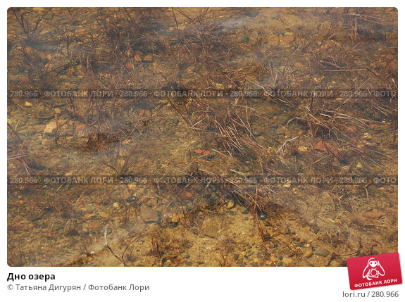 Купить «Дно озера», фото № 280966, снято 9 мая 2008 г. (c) Татьяна Дигурян / Фотобанк Лори