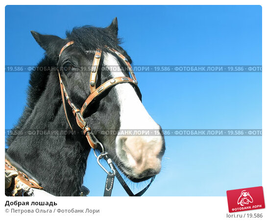 Добрая лошадь, фото № 19586, снято 17 февраля 2007 г. (c) Петрова Ольга / Фотобанк Лори