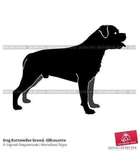 Купить «Dog Rottweiler breed. Silhouette», иллюстрация № 29591014 (c) Сергей Лаврентьев / Фотобанк Лори