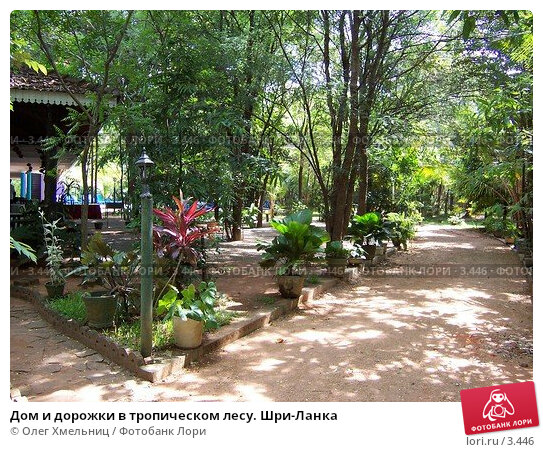 Дом и дорожки в тропическом лесу. Шри-Ланка, фото № 3446, снято 8 мая 2005 г. (c) Олег Хмельниц / Фотобанк Лори
