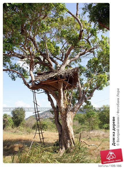 Дом на дереве, фото № 109186, снято 3 июня 2007 г. (c) Валерий Шанин / Фотобанк Лори