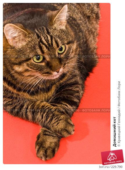 Домашний кот, фото № 229790, снято 8 января 2005 г. (c) Кравецкий Геннадий / Фотобанк Лори