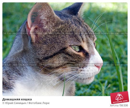 Домашняя кошка, фото № 58530, снято 3 октября 2004 г. (c) Юрий Синицын / Фотобанк Лори