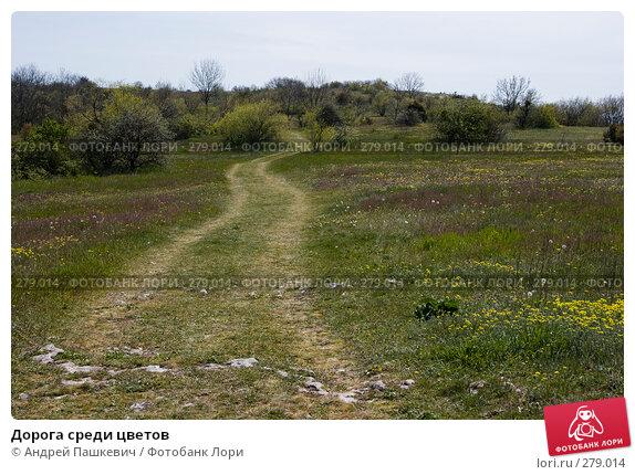 Купить «Дорога среди цветов», фото № 279014, снято 5 мая 2007 г. (c) Андрей Пашкевич / Фотобанк Лори