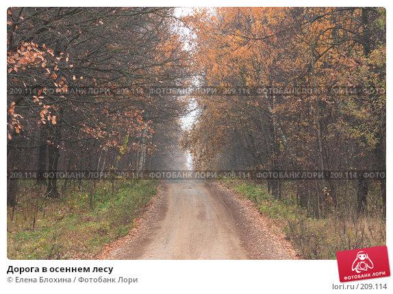 Дорога в осеннем лесу, фото № 209114, снято 26 октября 2007 г. (c) Елена Блохина / Фотобанк Лори