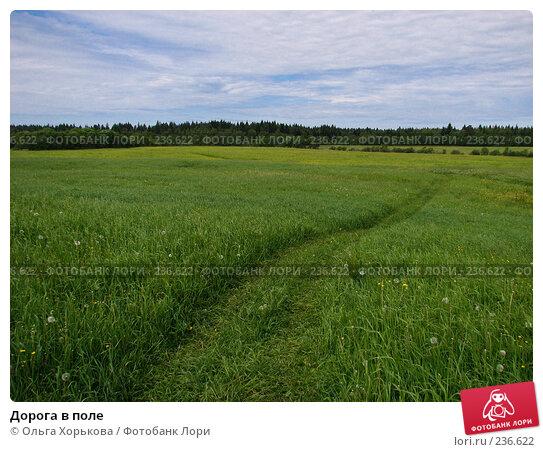 Купить «Дорога в поле», фото № 236622, снято 11 июня 2007 г. (c) Ольга Хорькова / Фотобанк Лори