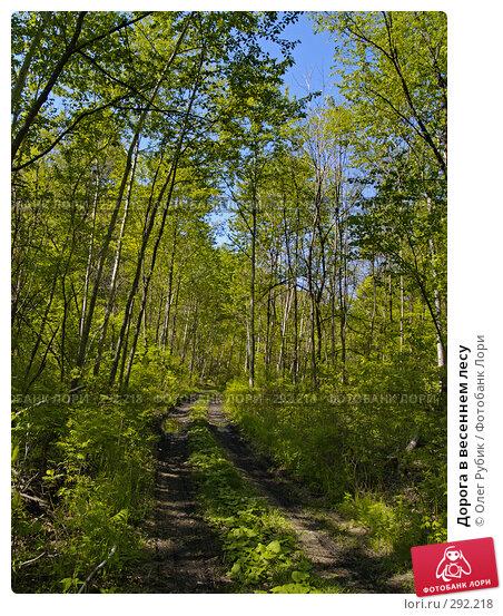 Дорога в весеннем лесу, фото № 292218, снято 14 мая 2008 г. (c) Олег Рубик / Фотобанк Лори