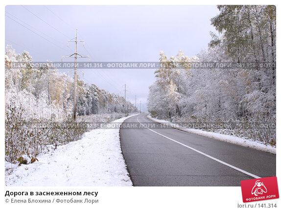 Дорога в заснеженном лесу, фото № 141314, снято 16 октября 2007 г. (c) Елена Блохина / Фотобанк Лори