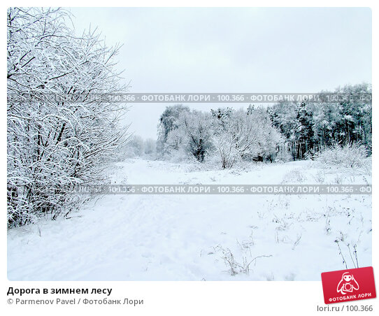 Купить «Дорога в зимнем лесу», фото № 100366, снято 15 февраля 2007 г. (c) Parmenov Pavel / Фотобанк Лори