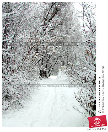 Дорога в зимнем лесу, фото № 104730, снято 26 мая 2017 г. (c) Parmenov Pavel / Фотобанк Лори
