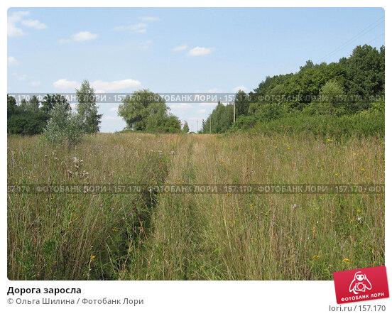 Дорога заросла, фото № 157170, снято 8 августа 2007 г. (c) Ольга Шилина / Фотобанк Лори