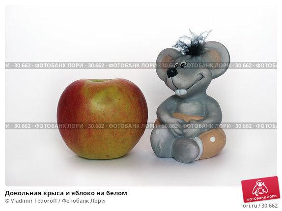 Купить «Довольная крыса и яблоко на белом», фото № 30662, снято 7 апреля 2007 г. (c) Vladimir Fedoroff / Фотобанк Лори