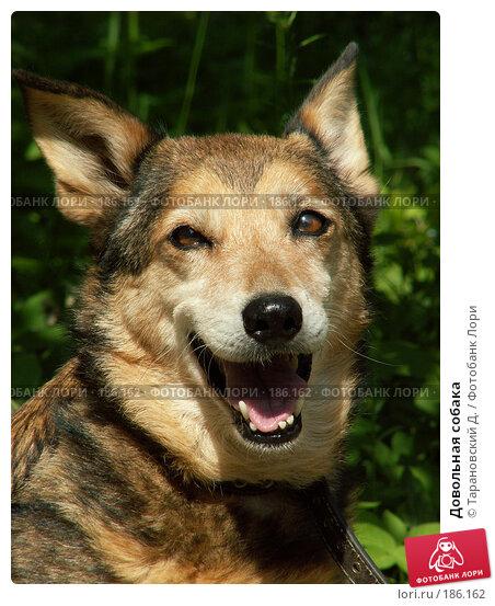 Купить «Довольная собака», фото № 186162, снято 12 июня 2007 г. (c) Тарановский Д. / Фотобанк Лори