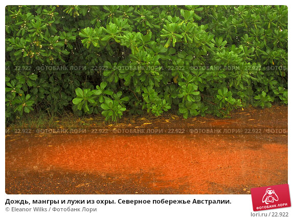 Дождь, мангры и лужи из охры. Северное побережье Австралии., фото № 22922, снято 9 апреля 2007 г. (c) Eleanor Wilks / Фотобанк Лори