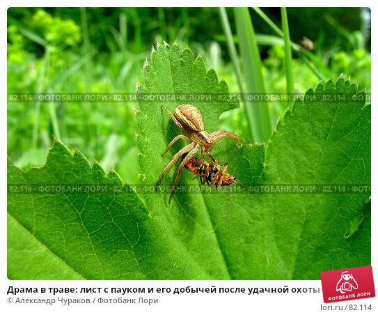 Драма в траве: лист с пауком и его добычей после удачной охоты, фото № 82114, снято 4 июня 2006 г. (c) Александр Чураков / Фотобанк Лори