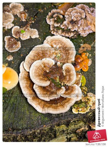Древесный гриб, фото № 130130, снято 20 октября 2007 г. (c) Argument / Фотобанк Лори