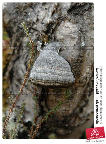 Древесный гриб Трутовик( хобот), фото № 44042, снято 9 мая 2007 г. (c) Владимир Тимошенко / Фотобанк Лори