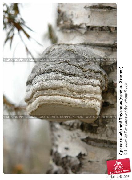 Древесный гриб Трутовик(слоеный пирог), фото № 42026, снято 9 мая 2007 г. (c) Владимир Тимошенко / Фотобанк Лори