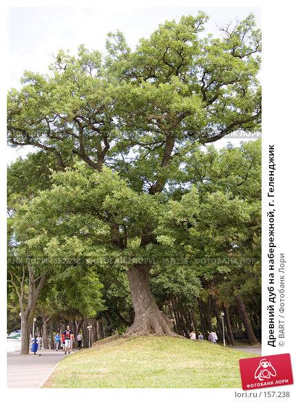 Древний дуб на набережной, г. Геленджик, фото № 157238, снято 22 мая 2017 г. (c) BART / Фотобанк Лори