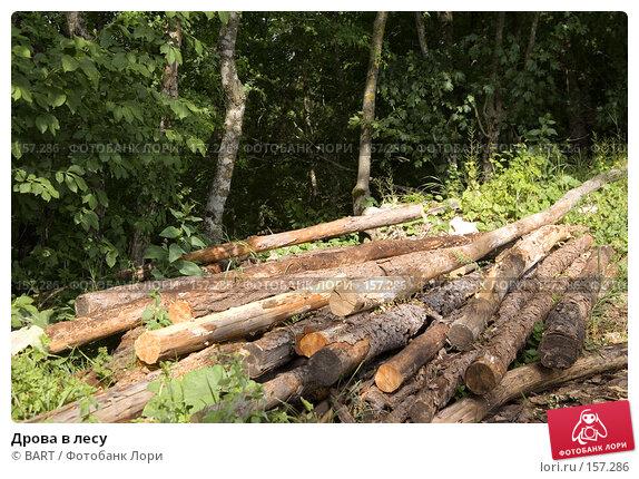 Купить «Дрова в лесу», фото № 157286, снято 17 марта 2018 г. (c) BART / Фотобанк Лори