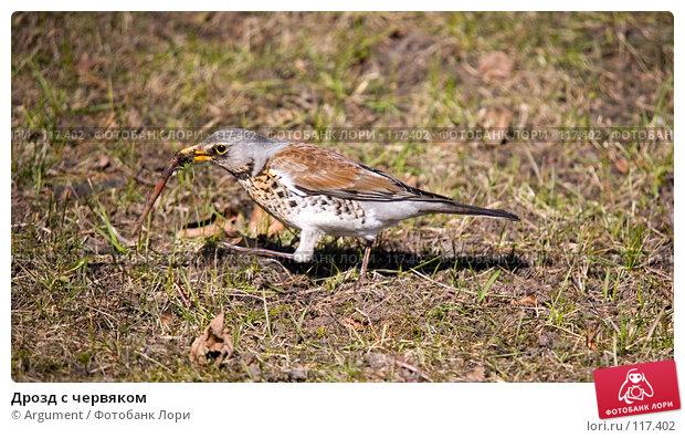 Дрозд с червяком, фото № 117402, снято 12 апреля 2007 г. (c) Argument / Фотобанк Лори