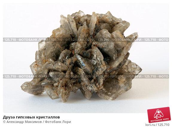 Друза гипсовых кристаллов, фото № 125710, снято 23 марта 2006 г. (c) Александр Максимов / Фотобанк Лори