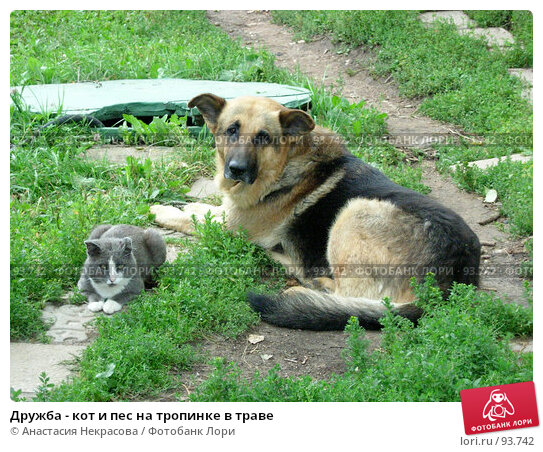 Дружба - кот и пес на тропинке в траве, фото № 93742, снято 6 августа 2006 г. (c) Анастасия Некрасова / Фотобанк Лори