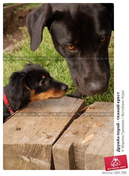 Дружба порой - тяжкий крест, фото № 201790, снято 12 августа 2006 г. (c) Марина Гуменюк / Фотобанк Лори