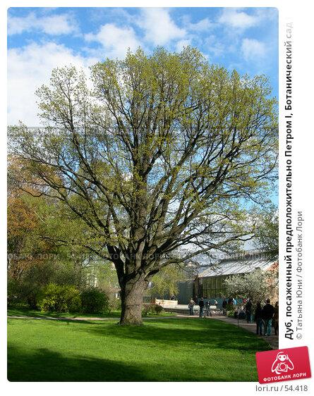 Дуб, посаженный предположительно Петром I, Ботанический сад МГУ, фото № 54418, снято 9 мая 2007 г. (c) Татьяна Юни / Фотобанк Лори