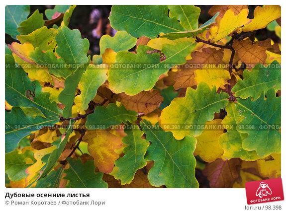Дубовые осенние листья, фото № 98398, снято 29 сентября 2007 г. (c) Роман Коротаев / Фотобанк Лори
