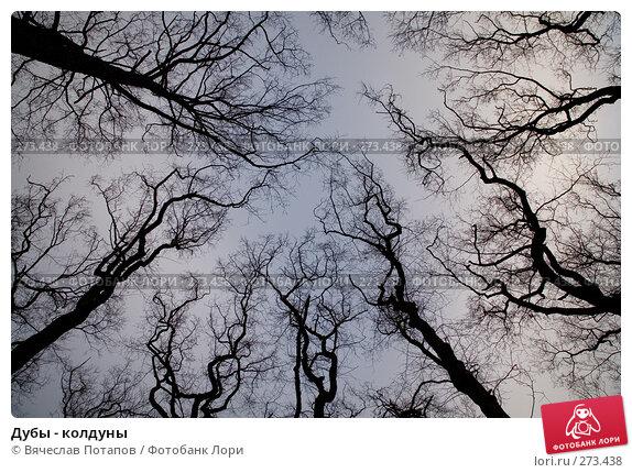 Дубы - колдуны, фото № 273438, снято 21 декабря 2007 г. (c) Вячеслав Потапов / Фотобанк Лори