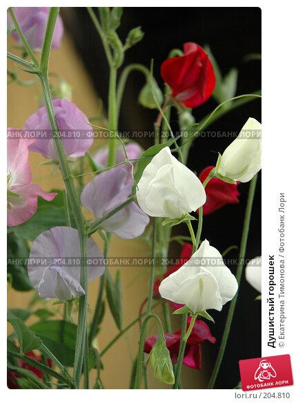 Купить «Душистый горошек», фото № 204810, снято 30 июля 2006 г. (c) Екатерина Тимонова / Фотобанк Лори