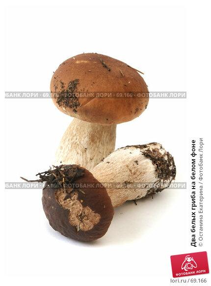 Два белых гриба на белом фоне, фото № 69166, снято 26 июля 2007 г. (c) Останина Екатерина / Фотобанк Лори