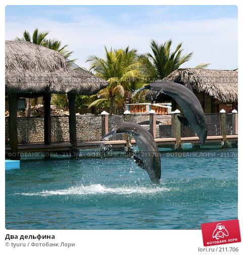 Два дельфина, фото № 211706, снято 9 июня 2007 г. (c) tyuru / Фотобанк Лори