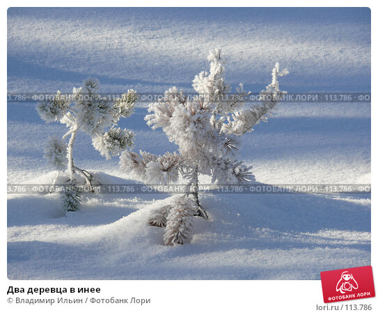 Два деревца в инее, фото № 113786, снято 9 ноября 2007 г. (c) Владимир Ильин / Фотобанк Лори