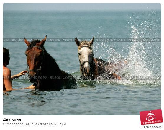Два коня, фото № 53506, снято 10 августа 2004 г. (c) Морозова Татьяна / Фотобанк Лори