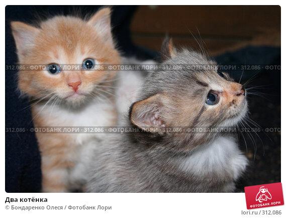 Два котёнка, фото № 312086, снято 30 августа 2006 г. (c) Бондаренко Олеся / Фотобанк Лори