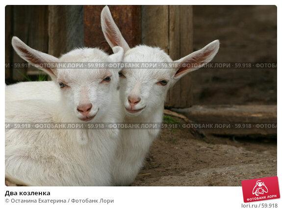 Два козленка, фото № 59918, снято 16 мая 2006 г. (c) Останина Екатерина / Фотобанк Лори