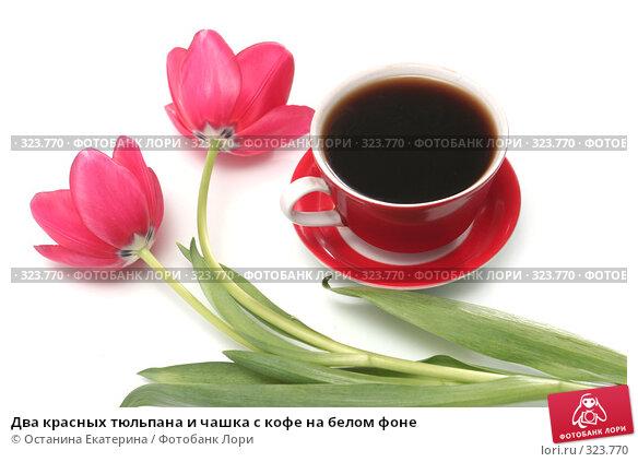 Два красных тюльпана и чашка с кофе на белом фоне, фото № 323770, снято 17 января 2008 г. (c) Останина Екатерина / Фотобанк Лори