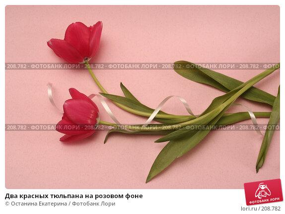 Два красных тюльпана на розовом фоне, фото № 208782, снято 17 января 2008 г. (c) Останина Екатерина / Фотобанк Лори