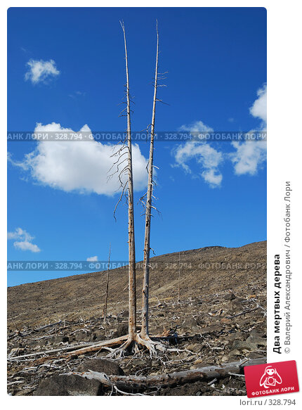 Купить «Два мертвых дерева», фото № 328794, снято 15 июня 2008 г. (c) Валерий Александрович / Фотобанк Лори