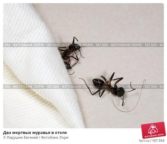 Два мертвых муравья в отеле, фото № 167554, снято 7 декабря 2016 г. (c) Парушин Евгений / Фотобанк Лори