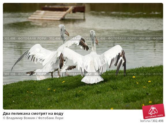 Два пеликана смотрят на воду, фото № 302498, снято 17 мая 2008 г. (c) Владимир Воякин / Фотобанк Лори