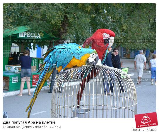 Два попугая Ара на клетке, фото № 182022, снято 9 сентября 2007 г. (c) Иван Мацкевич / Фотобанк Лори